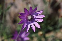 Flower (Hugo von Schreck) Tags: flower blume blüte hugovonschreck canoneos5dsr tamron28300mmf3563divcpzda010