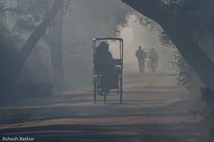 Foggy day (asheshr) Tags: 7200 keoladeonationalpark bharatpur bharatpurbirdsanctuary d7200 fog foggymorning landscape landscapephotography misty nikkon peoplephotography rajasthan