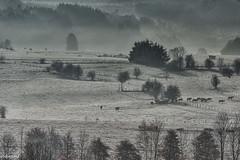 17112019-DSC_0082 (vidjanma) Tags: compogne automne brume givre matin vaches