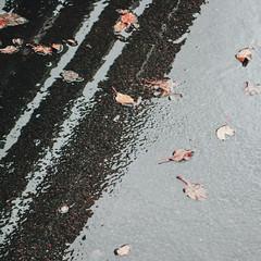 Rainy monday (Andrei Grigorev) Tags: rain reflection asphalt texture wet leaves autumn urban minimal minimalism minimalist shadow light grey andreigrigorev