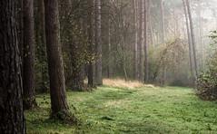 Nature Reserve Essex (J a s o n B o l d e r o) Tags: mist trees copyrightfreeimage fog naturereserve phylliscurrienaturereserve sony treesinmist woodland essex greatleighs