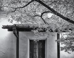 Leafy doorway (Tim Ravenscroft) Tags: door doorway maple foliage architecture branch hokongoin kyoto japan monochrome blackandwhite blackwhite