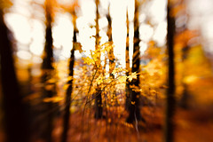 Waldspaziergang (kuestenkind) Tags: lensbaby waldspaziergang wald herbst norddeutschland northgermany forest bokeh schleswigholstein canon 6d