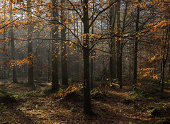 Woodland Warmth (hatheyphotos) Tags: wood trees autumn fall leaves