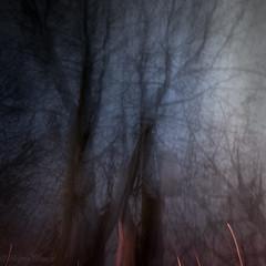 Transforming by passing (hajlana) Tags: compulsivewords impulsive living tree night