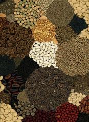 59995.01 Pisum, Rheum, mesclun, Petroselinum, Capsicum, Anethum, Baptisia, Phaseolus, Spinacia, Cucurbita, Beta, Allium, wildflower, Fagopyrum, Lactuca, Dianthus, Phaseolus, Daucus, Cosmos, Lunaria, Petroselinumm Phaseolus, Pisum, (horticultural art) Tags: horticulturalart dried assemblage rounds seeds berries