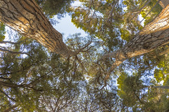 Wooden Arms (Santini1972) Tags: trees wood nature sky green fisheye nikond7500 forest barcelona