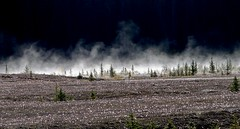 Morning Mist beside Icefields Parkway, Alberta (Joseph Hollick) Tags: alberta icefieldsparkway mist fog