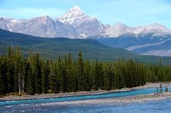 Mountain Stream in the Rocky Mountains, Alberta (Joseph Hollick) Tags: alberta icefieldsparkway mountains mountain stream river