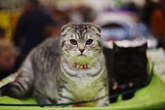 cats (Сonstantine) Tags: cat catslife catsoftheworld catscatscats cute animals meow bokeh