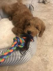 Rylee loves toys