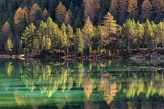 *colors and reflections of the lake Palpuogna* (Albert Wirtz @ Landscape and Nature Photography) Tags: albertwirtz schweiz switzerland suisse graubünden grisons lake see bergsee herbst autunno autumn fall wandern hiking alpen alps palpuogna laidapalpuogna mountainlake tree first nature natur baum wald spiegelung reflection fineart landscapefineart fineartphotography nikon d810 bergün filisur albula passodialbula water wasser colorofwater landscape landschaft paesaggio paysage paesaggi paisaje campo campagne campagna naturaleza larch lärchen