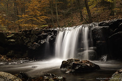 All Ways Goes Down (Crofter's) Tags: autumn autumncolors autumn2019 leaves moss forestmoss forest walkingthroughtheforest water waterfall waterfalls watertrails longexposure tripod trails trees tree sony sonyalpha sonya sony77ii sonyalpha77ii sonya77ii sony1650 sony1650mm stream wildlands wildlandspictures november november2019 november2k19 opeth dirgeofnovember epica designyouruniverse ndfilter filter nature