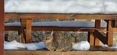 Katua eguzkitan Urbixan (eitb.eus) Tags: eitbcom 23850 g156981 animales gipuzkoa oñati gurutzeazcarate