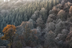 17112019-DSC_0017 (vidjanma) Tags: ourthe arbres automne brume givre matin