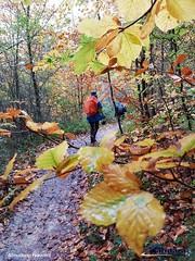 Selva-de-Irati-noviembre-2019 (ANDARA RUTAS) Tags: selva irati navarra olite ochagavia isaba roncal hayas hayedo otoño noviembre ruta senderismo grupo guia andara viaje