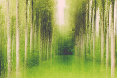 Arbores (Missy Karine) Tags: arbres forest woods forêt bois nature vegetal abigfave ain artistic abstrait expositionnaturelle canon canon7dmarkii canonfrance lines texture landscape intentionalcameramovement abstract