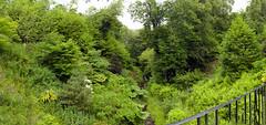 Photo of house of dunn woodland walk