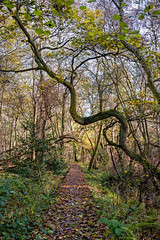 Woodland Path at Dunwich (Electric Gnome) Tags: wood trees d850 nikon forest leaves dunwich autumn suffolk rural england uk eastanglia