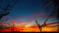 Desert Silhouettes at Sunset (LDMcCleary) Tags:
