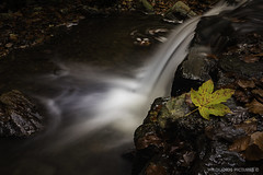 All Ways Goes Down (Crofter's) Tags: autumn autumncolors autumn2019 leaves moss forestmoss forest walkingthroughtheforest water waterfall waterfalls watertrails longexposure tripod trails trees tree sony sonyalpha sonya sony77ii sonyalpha77ii sonya77ii sony1650 sony1650mm stream wildlands wildlandspictures november november2019 november2k19 opeth dirgeofnovember epica designyouruniverse ndfilter filter nature maple mapleleaf