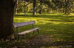Soledad (José Antonio Domingo RODRÍGUEZ RODRÍGUEZ) Tags: utdoors park grass bench tranquil scene tree day nature growth landscape trunk wood scenics césped campo árbol parque banco soledad madrid capricho