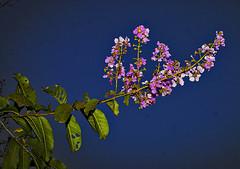 CRW_0381_RT8_1 (annieleroy479) Tags: fleur lac