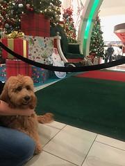 Nala waiting for Santa