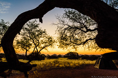 Camping in the savannah (Jan Jungerius) Tags: africa afrika namibia namibië savanne savannah sonnenuntergang sunset zonsondergang grass gras tree baum boom äste takken branches tent zelt nikond750 tamronsp1530mm landschap landscape landschaft natur nature natuur elitegalleryaoi bestcapturesaoi aoi