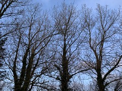 The Sky Above - Ennis, Ireland - November 2019 (firehouse.ie) Tags: november trees ireland winter sky tree nature landscape branches eire ennis twigs roi 2019 autumn fall clare baretrees autumnal barebranches