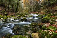 L'allondon (bewo22) Tags: 01 autumn france rio automne river landscapes europa europe bosque foret paysages ain echenevex lessourcesdelallondon forest paisaje rivière otoño otono allondon