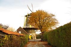 "Middelburg ""De Koning"" (Omroep Zeeland) Tags: molens middelburg"