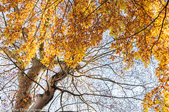 Looking Up (christineeltherington) Tags: wood nature scotland woodlands wintercanopy trees winter wild woodland woods canopy
