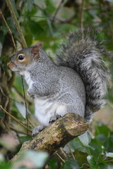 Face-Off with a Squirrel at Yarrow Valley this afternoon. (stevencarruthers93) Tags: springwatch autumnwatch winterwater nature wildlife naturephotography wildlifephotography greenheart flora fauna photography nikon nikonphotography chorley coppull yarrowvalley yarrow