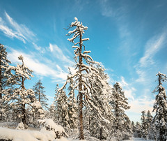Lovely Lapland (ikkasj) Tags: lapland finland muonio winter snow