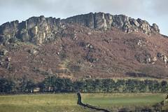 HeatherHillside (Tony Tooth) Tags: nikon d7100 nikkor 55300mm hill rocks theroaches hencloud upperhulme landscape countryside heather staffs staffordshire moors moorland staffordshiremoorlands england