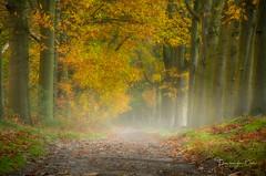 Autumn Forest (Ellen van den Doel) Tags: natuur landscape nature mist nederland outdoor licht bos herfst landschap forest oktober netherlands fog fall 2019 light bergenopzoom noordbrabant