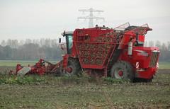lewedorp (Omroep Zeeland) Tags: bieten bietenrooien