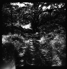 (svaboda!) Tags: biancoenero bw bn cammini trekking dianaf 6x6 120mm bosco hood