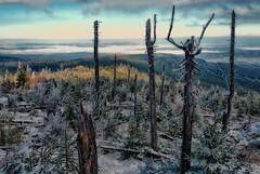Early snow in the Bavarian Forest (ramerk_de) Tags: osser bavarianforest bayerischerwald border snow kyrill trees lam ostrý autumncolors
