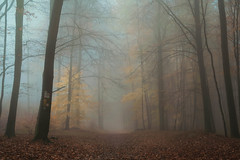 Visible Silence (marionrosengarten) Tags: wald192 forest mood woods trees mystic mysticatmosphere autumn leafs orange colourful nature silence path forestpath spooky fog mist morning sundaymorning felsberg nikon wald waldweg herbst
