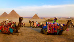 Panoramic view of the Pyramids in Egypt (peggyhr) Tags: peggyhr pyramids camels bird egypt thelooklevel1red thelooklevel2yellow thelooklevel3orange frameit~level01~ super~sixbronze☆stage1☆ photozonelevel1 dslrautofocuslevel1 dslrautofocuslevel2 dslrautofocuslevel3 super~six☆stage2☆silver dslrautofocuslevel4 photozonelevel2 dslrautofocuslevel5 carolinasfarmfriends dslrautofocuslevel6 super~six☆stage3☆gold