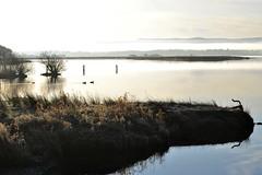 Loch Lomond scene (conall..) Tags: loch lomond waterfront balmaha lochlomond lochlomondwaterfront bright morning still lake water shore