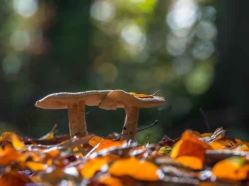 Autumn in Linden wood
