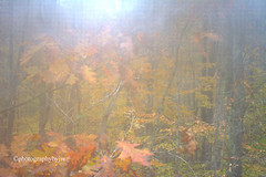 Misty Fall Color (Photographybyjw) Tags: misty fall color through wet screen very diffused north carolina ©photographybyjw autumn foliage trees