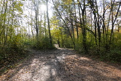 Vallon du Fier @ Annecy (*_*) Tags: sony rx100vii m7 2019 november afternoon autumn automne fall annecy 74 hautesavoie walk france europe savoie vallondufier park