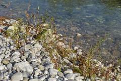 Vallon du Fier @ Annecy (*_*) Tags: november autumn afternoon sony m7 2019 rx100vii park france annecy fall automne europe walk savoie 74 hautesavoie vallondufier river riviere fier