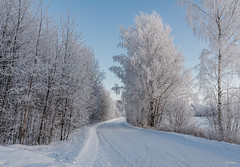 Frozen (thore.bryhn) Tags: frozen winter trees snow cold