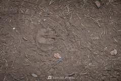 Pisadas superpuestas (SantiMB.Photos) Tags: 2blog 2tumblr 2ig lafebró tarragona verano summer baixcamp suelo ground huellas footprints lafebro cataluna españa