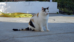 Hermine_06457 (Wayloncash) Tags: spanien spain andalusien tiere tier animals animal katzen katze cats cat